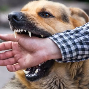 Who is held responsible in an animal attack case?